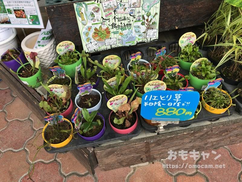 メイクマンの観葉植物